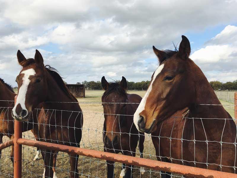 Lievito di birra per cavalli
