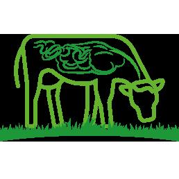 Lievito di birra zootecnico per bovini