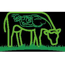 lievito vivo lievito di birra zootecnico bovini e ruminanti