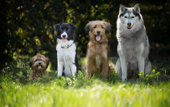 petMod XL for large breed dogs