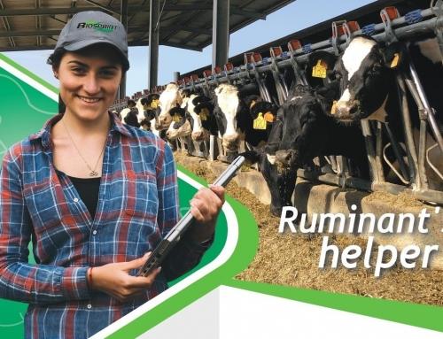 Biosprint® in Ruminants: new Marketing Sheet