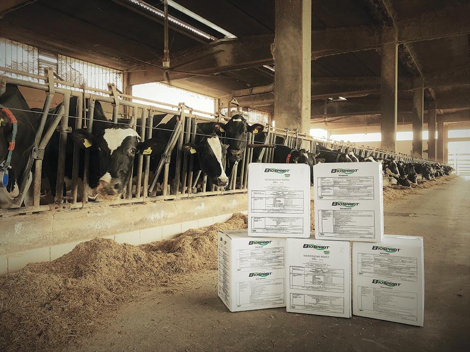 Biosprint - lievito vivo - lievito di birra per ruminanti
