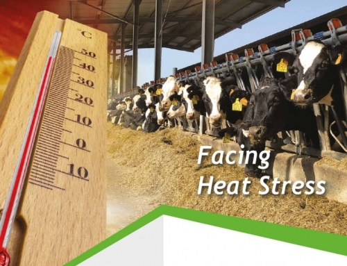 Heat Stress in dairy cows: how to preserve ruminants from heat stress damages